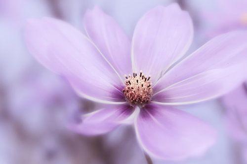 Violetter Blütentraum