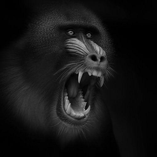 Screaming Mandril von Ruud Peters