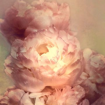 Romantische pioenen van Claudia Moeckel