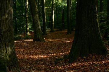 Herfstbos van Kai Grijff
