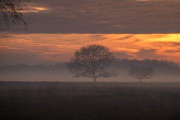 einen sonnigen, aber nebligen Nachmittag in der Delleboer Heide. von Thea De Jong