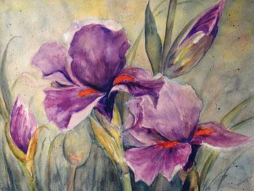 Iris van Christine Nöhmeier