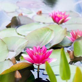Waterlelies van Paula van den Akker