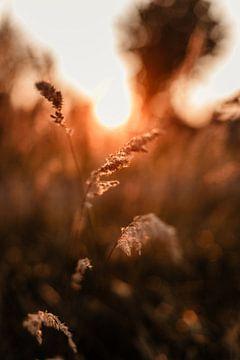 J'aime le coucher de soleil entre les herbes sur Anouk Strijbos