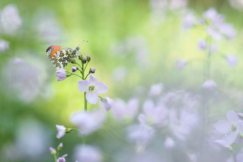 Vlindertje tussen bloemenzee van Paul Muntel