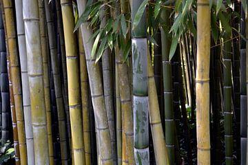 Bamboe in de tuin. van Susan Dekker