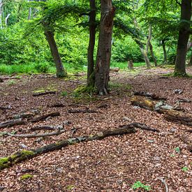 Bomen en boomstammen in Darßwald van Rico Ködder