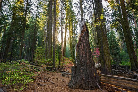 Yosemite sunrise van Ton Kool