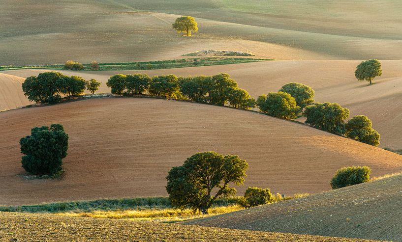 Rolling hills van Steven Driesen