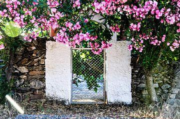 roze bloemen hekje van Sabrina Varao Carreiro