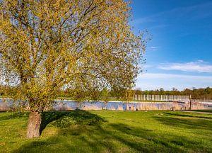 Park in de stad Schwerin Mecklenburg-Voor-Pommeren van Animaflora PicsStock