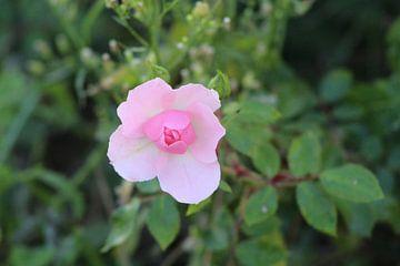Flower in de Duinen van Debby Frijn