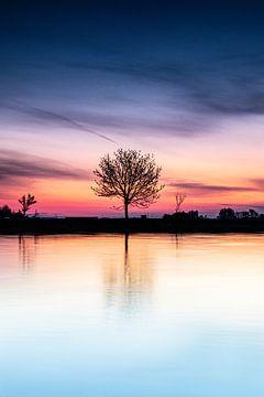 De éénzame boom van Richard Nell