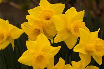 Gelbe Blumen im Dunkeln von J..M de Jong-Jansen