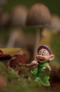 Hout sprokkelen in het bos van