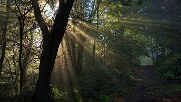 Erste Sonnenstrahlen Im Wald von Daphne Photography