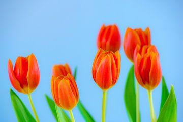 Bosje tulpen von Maerten Prins