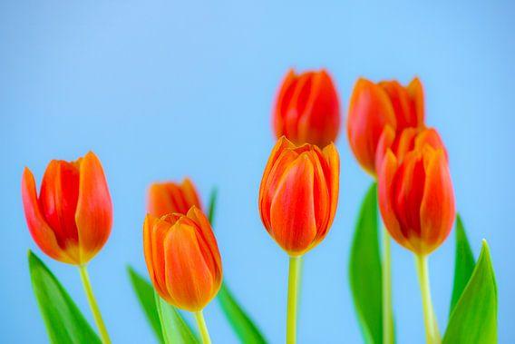 Bosje tulpen van Maerten Prins