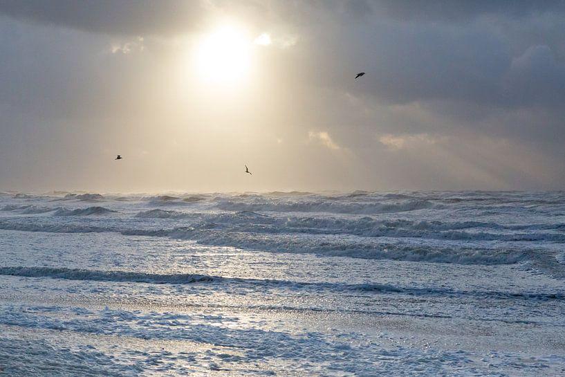 Strand en vogels | Meeuwen boven de Noordzee tijdens ondergaande zon van Servan Ott