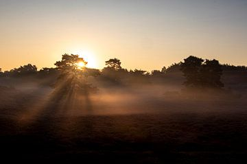 aufgehende Sonne auf der Brussemmerheide von Ronenvief