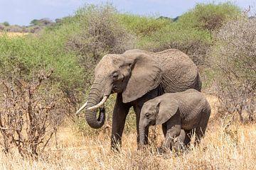 Olifant moeder en kalf in Tanzania van Mickéle Godderis