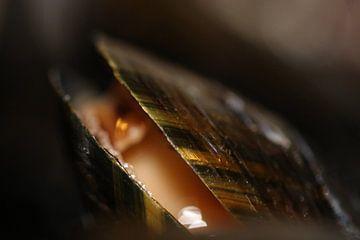 Holländische Muschel von Bärbel Severens