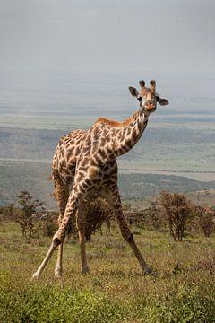 Giraffe Ochtendgymnastiek van Stephan Spelde