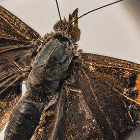 vlinder natuur sur Paul Tolen