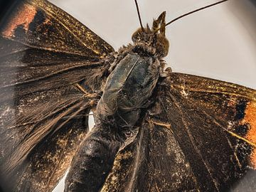 vlinder natuur von Paul Tolen