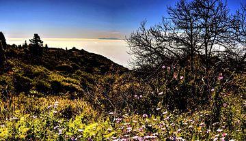 tenerife  met wildgroei  aan bloemen en boom aan de  horizon met blauwe lucht von Willy Van de Wiele