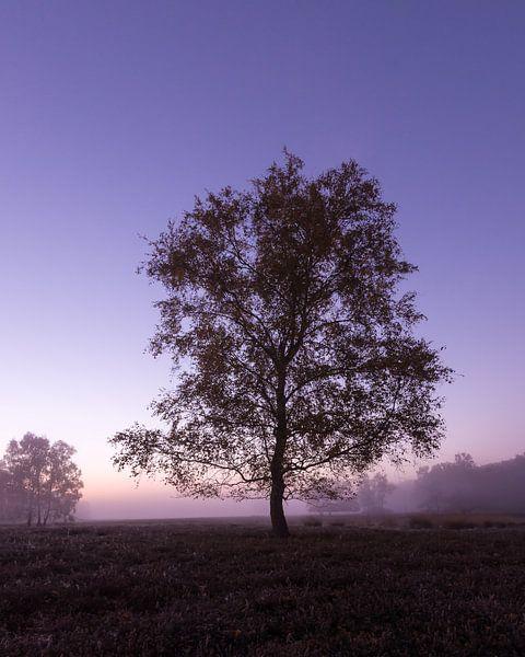 Strabrechtse Heide 262