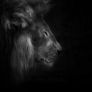 Squeeze, portret van een leeuw van Ruud Peters