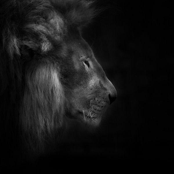 Squeeze, portrait of a lions sur Ruud Peters