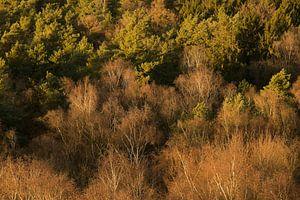 Bos van bovenaf