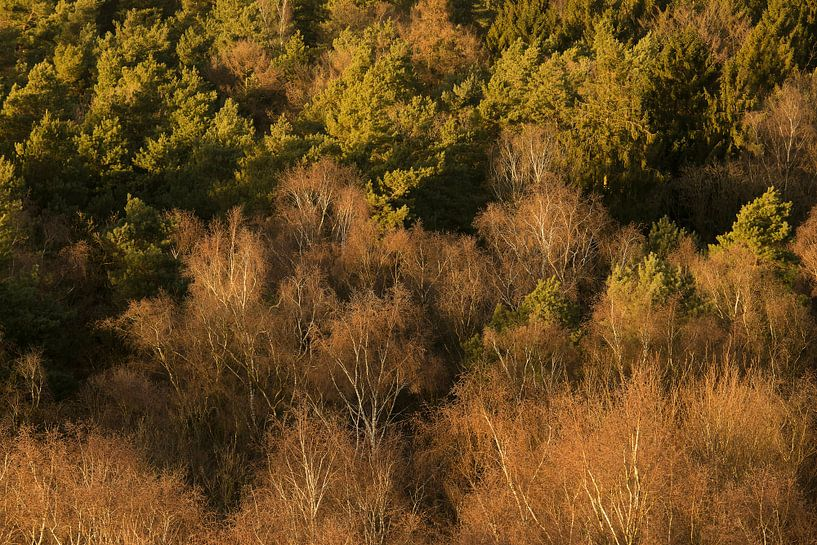 Bos van bovenaf van Elroy Spelbos