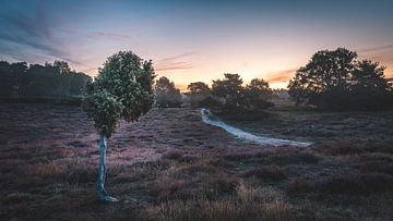 West-Repse Heide van Steffen Peters