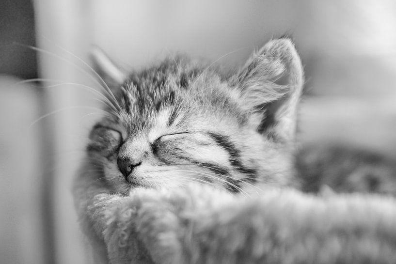 schlafende Katze in schwarz weiß von Urlaubswelt