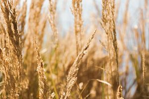 Gräser von Carmen Varo