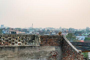 Klein aapje zit op een muurtje en kijkt uit over de kleurrijke stad Agra in India. van Twan Bankers
