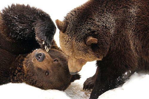 Beren in de sneeuw