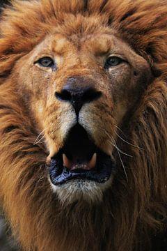 Lion van Sjoerd Reitsma