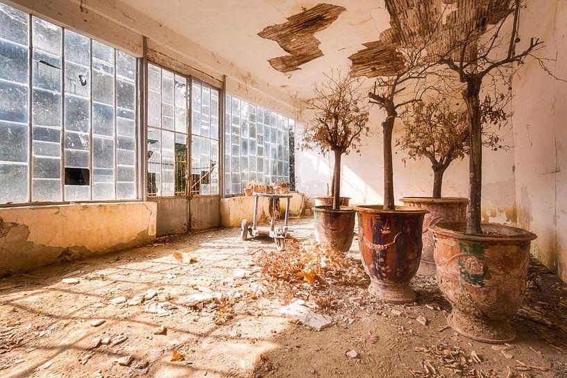 Planten Groeien. van Roman Robroek