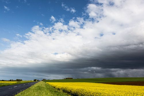 Normandië landschap met koolzaad in mei