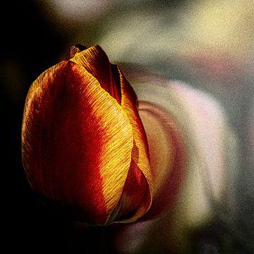 Tulpe von Dick Jeukens