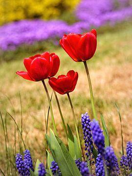 Tulpen von Rob Boon