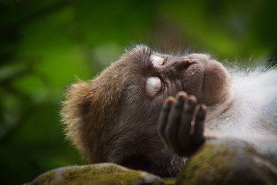 Slapend aapje in Monkey Forest Ubud