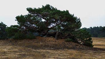 Niedriger grosser Baum von Richard de Ruijter