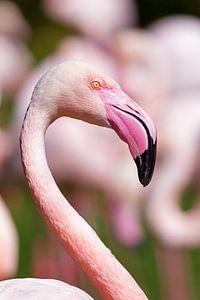 Flamingo portret
