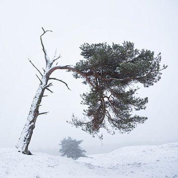 Kiefern in einer schneebedeckten Landschaft von anton havelaar