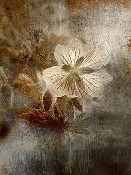 Geranium - friedlich monochrome von Claudia Gründler
